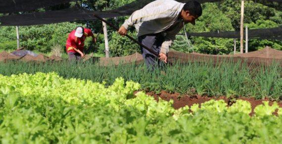 """Paraguay erlebt trotz der sogenannten """"Pandemie"""" ein bemerkenswertes Wachstum im Agrarsektor"""