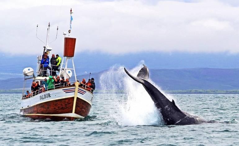 excursion-ballenas-husavik__destacado.jp